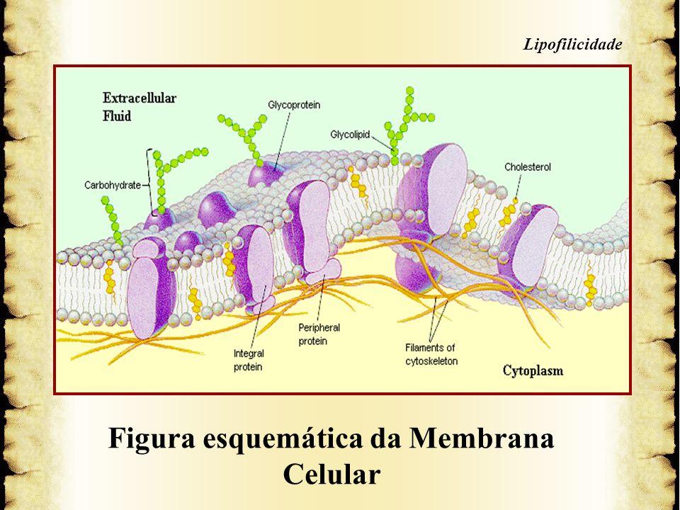 5. Membrana Celular Figura esquemática da Membrana Celular 5. Membrana Celular Lipofilicidade