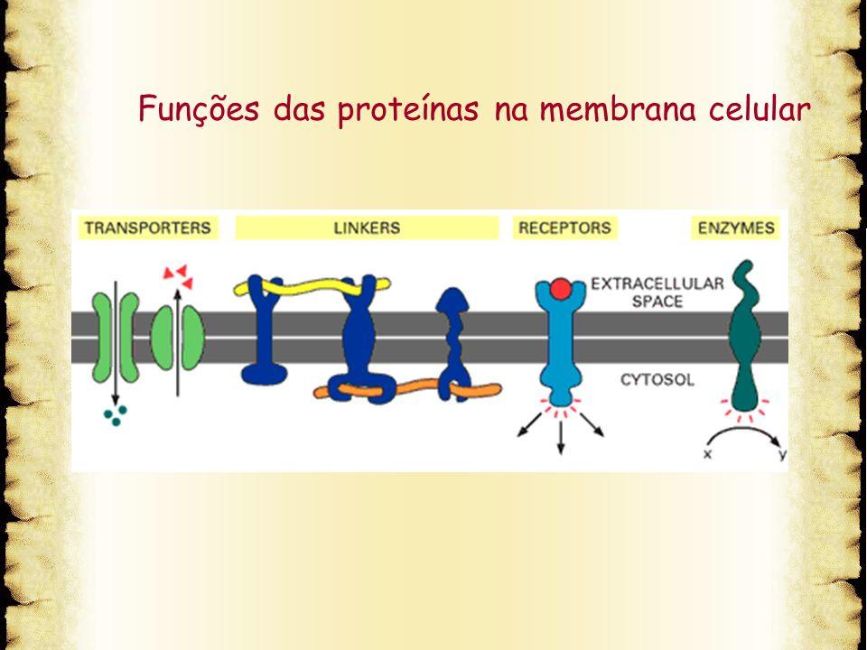 Funções das proteínas na membrana celular