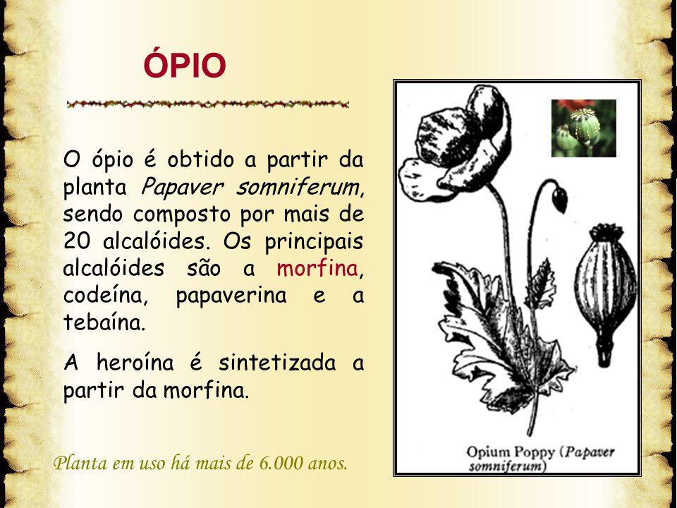 O ópio é obtido a partir da planta Papaver somniferum, sendo composto por mais de 20 alcalóides. Os principais alcalóides são a morfina, codeína, papa
