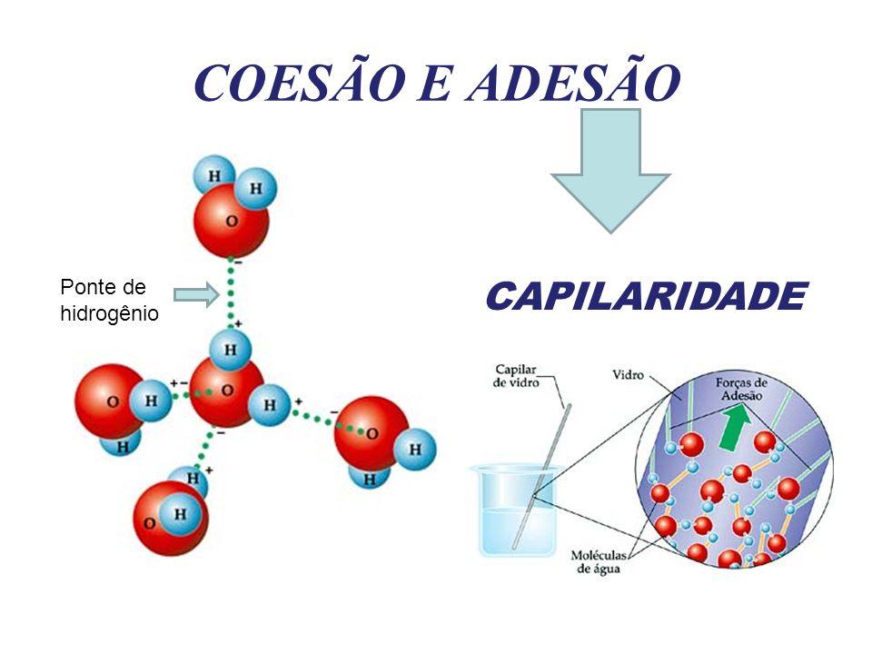 COESÃO E ADESÃO CAPILARIDADE Ponte de hidrogênio