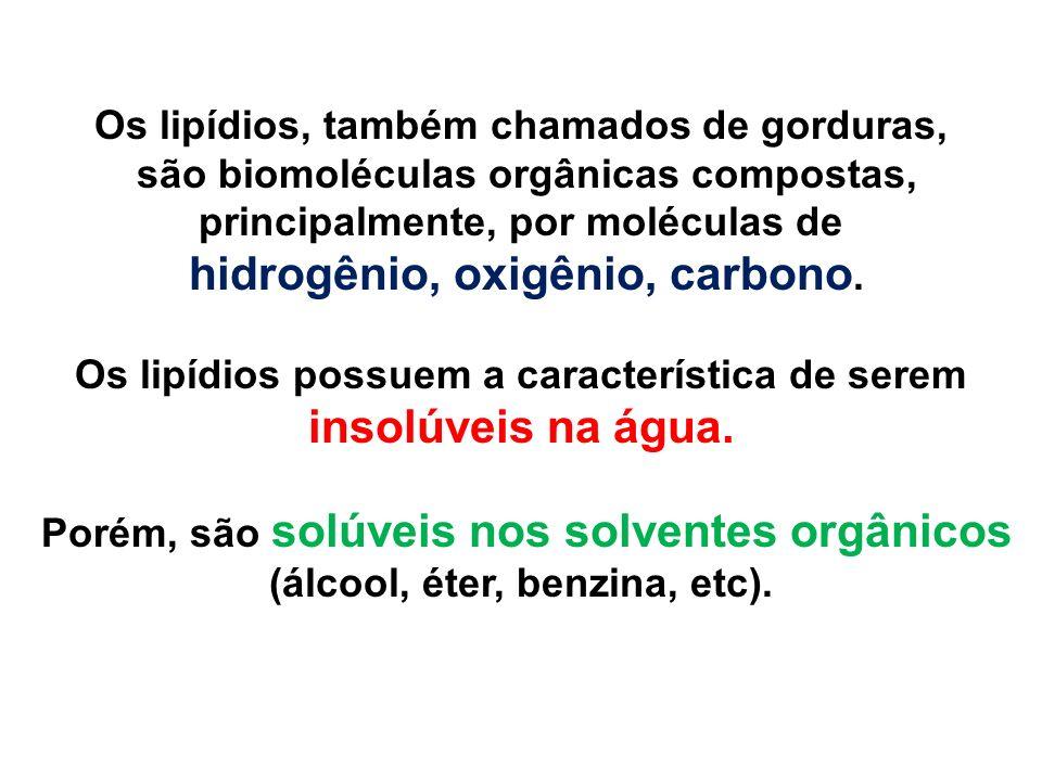 Os lipídios, também chamados de gorduras, são biomoléculas orgânicas compostas, principalmente, por moléculas de hidrogênio, oxigênio, carbono. Os lip