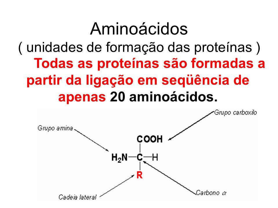 Aminoácidos ( unidades de formação das proteínas ) Todas as proteínas são formadas a partir da ligação em seqüência de apenas 20 aminoácidos.