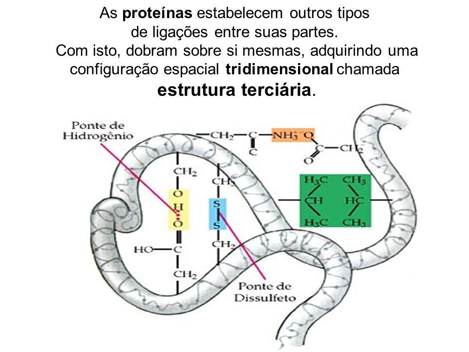 As proteínas estabelecem outros tipos de ligações entre suas partes. Com isto, dobram sobre si mesmas, adquirindo uma configuração espacial tridimensi