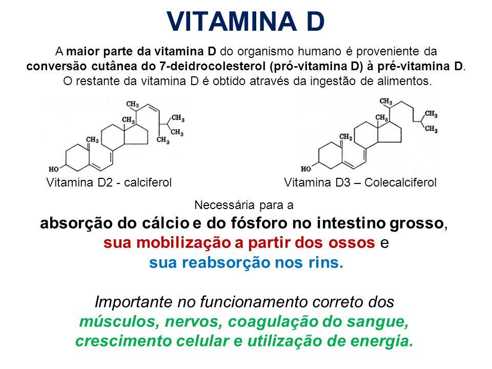 VITAMINA D Vitamina D2 - calciferolVitamina D3 – Colecalciferol Necessária para a absorção do cálcio e do fósforo no intestino grosso, sua mobilização
