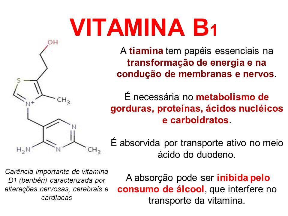 VITAMINA B 1 A tiamina tem papéis essenciais na transformação de energia e na condução de membranas e nervos. É necessária no metabolismo de gorduras,