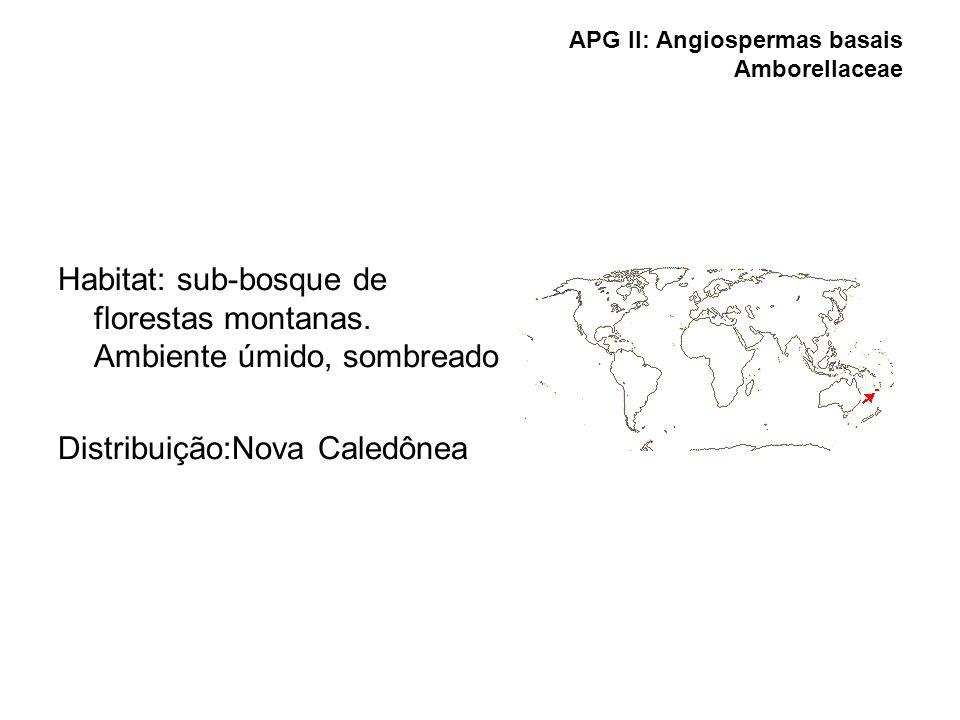 APG II: Angiospermas basais Amborellaceae Habitat: sub-bosque de florestas montanas. Ambiente úmido, sombreado Distribuição:Nova Caledônea
