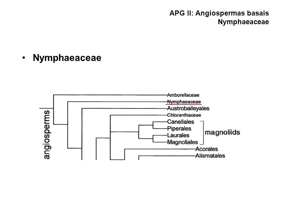 APG II: Angiospermas basais Nymphaeaceae Nymphaeaceae