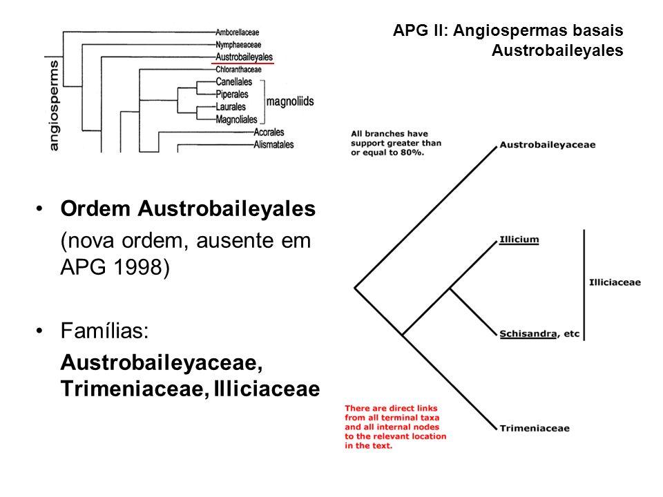 APG II: Angiospermas basais Austrobaileyales Ordem Austrobaileyales (nova ordem, ausente em APG 1998) Famílias: Austrobaileyaceae, Trimeniaceae, Illic