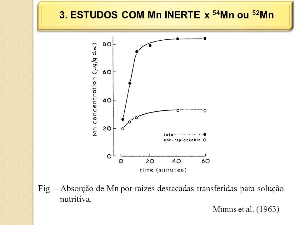 3. ESTUDOS COM Mn INERTE x 54 Mn ou 52 Mn Fig. – Absorção de Mn por raízes destacadas transferidas para solução nutritiva. Munns et al. (1963)