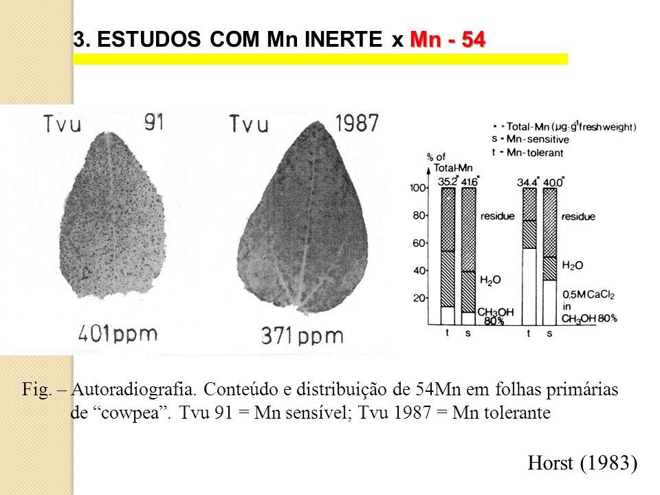 Mn - 54 3. ESTUDOS COM Mn INERTE x Mn - 54 Fig. – Autoradiografia. Conteúdo e distribuição de 54Mn em folhas primárias de cowpea. Tvu 91 = Mn sensível