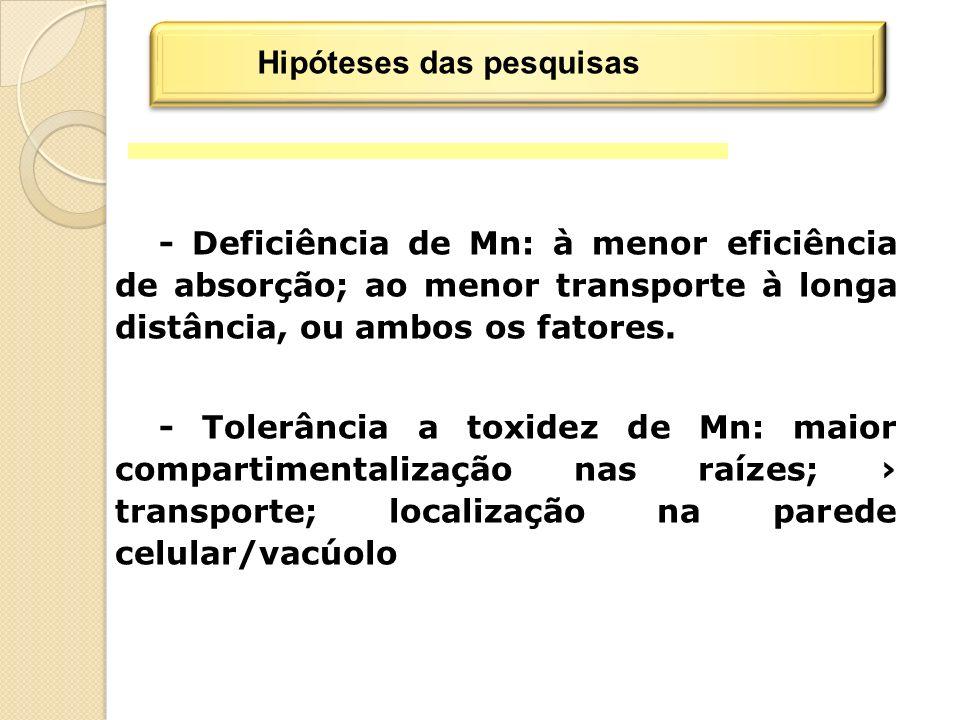 - Deficiência de Mn: à menor eficiência de absorção; ao menor transporte à longa distância, ou ambos os fatores.