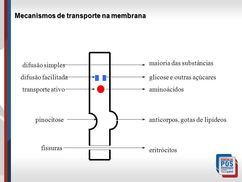 difusão simples difusão facilitada pinocitose transporte ativo fissuras maioria das substâncias glicose e outras açúcares aminoácidos anticorpos, gotas de lipídeos eritrócitos Mecanismos de transporte na membrana