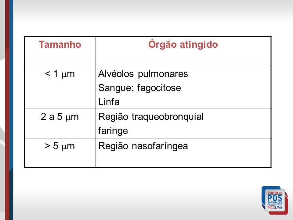 TamanhoÓrgão atingido < 1 m Alvéolos pulmonares Sangue: fagocitose Linfa 2 a 5 m Região traqueobronquial faringe > 5 m Região nasofaríngea