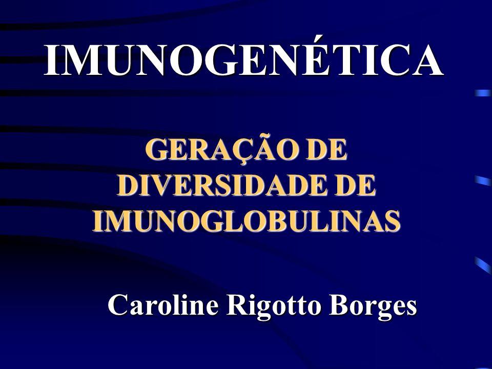 GERAÇÃO DE DIVERSIDADE DE IMUNOGLOBULINAS Caroline Rigotto Borges IMUNOGENÉTICA