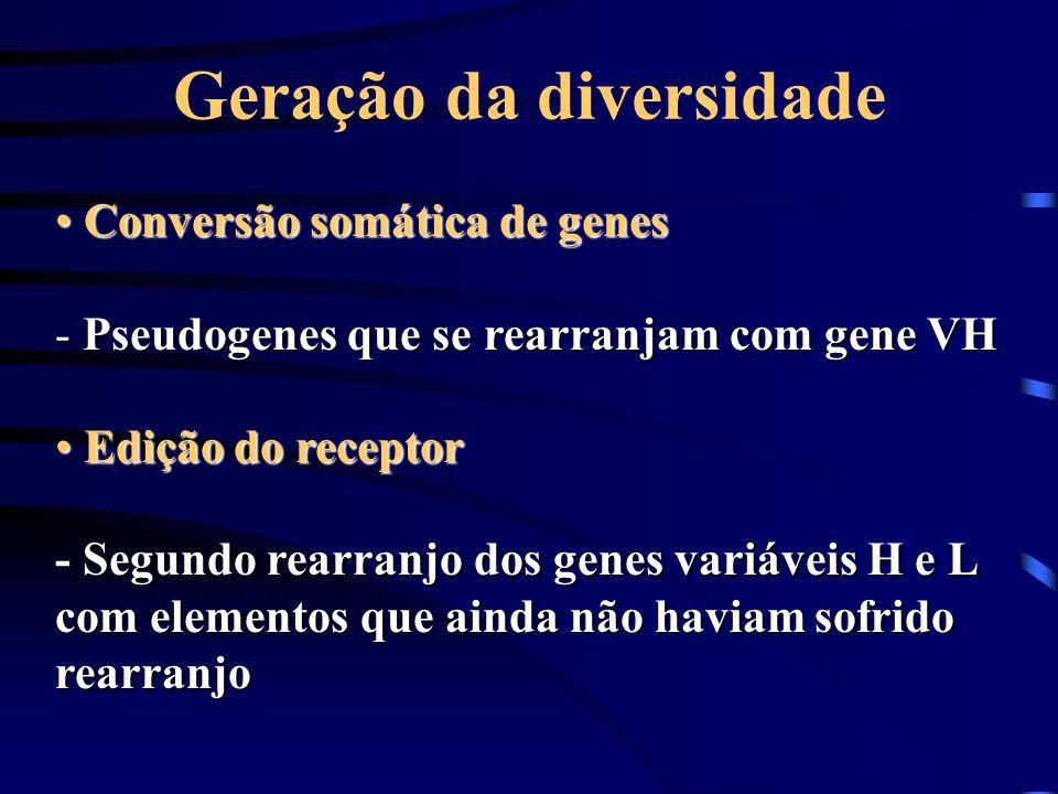 Geração da diversidade Conversão somática de genes Conversão somática de genes - Pseudogenes que se rearranjam com gene VH Edição do receptor Edição d
