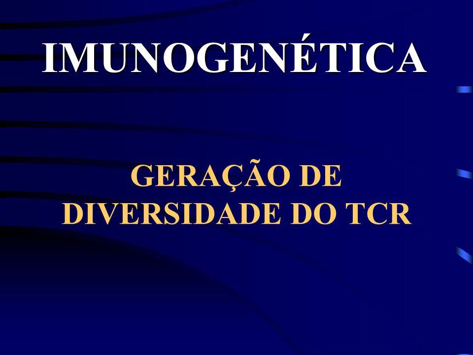 IMUNOGENÉTICA GERAÇÃO DE DIVERSIDADE DO TCR