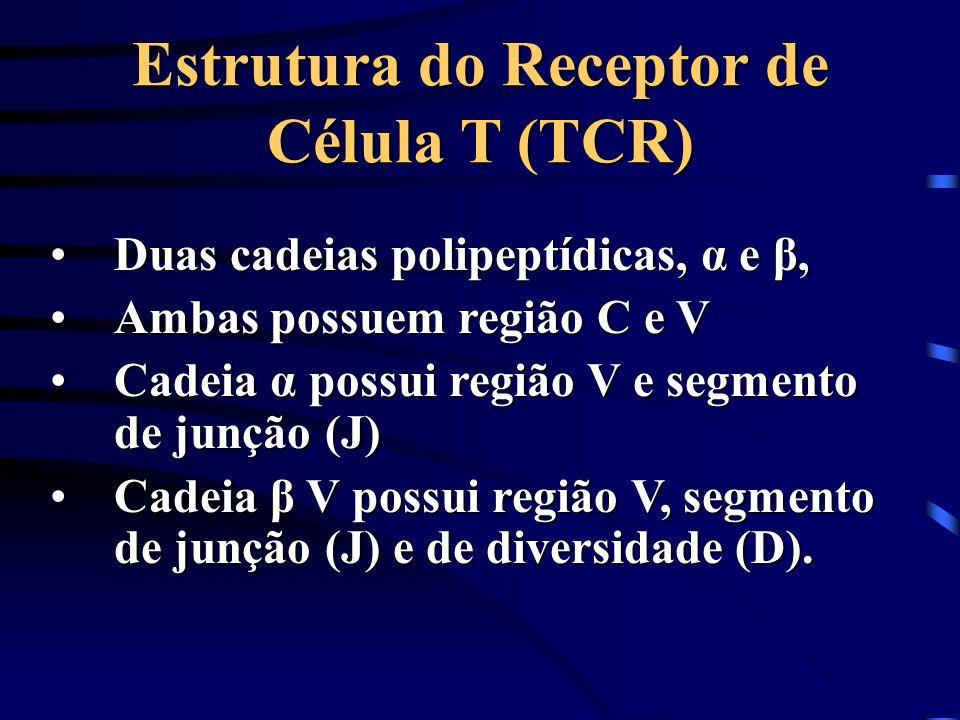 Estrutura do Receptor de Célula T (TCR) Duas cadeias polipeptídicas, α e β,Duas cadeias polipeptídicas, α e β, Ambas possuem região C e VAmbas possuem