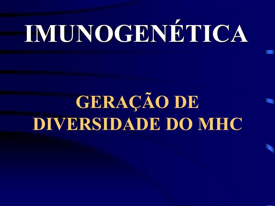 IMUNOGENÉTICA GERAÇÃO DE DIVERSIDADE DO MHC