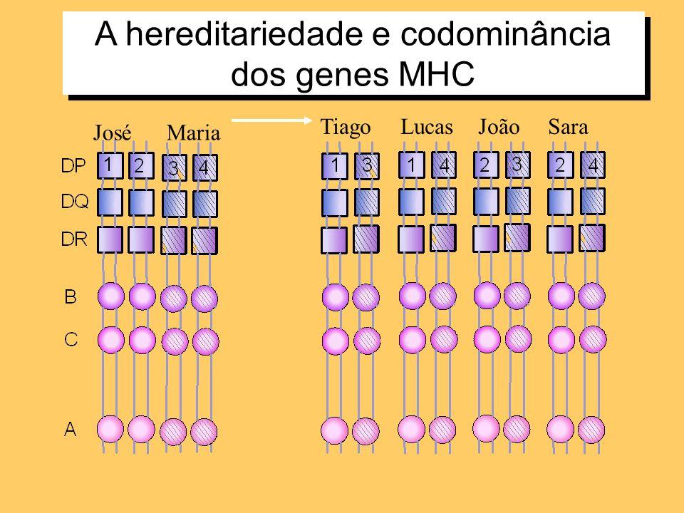 José Maria Tiago Lucas João Sara A hereditariedade e codominância dos genes MHC