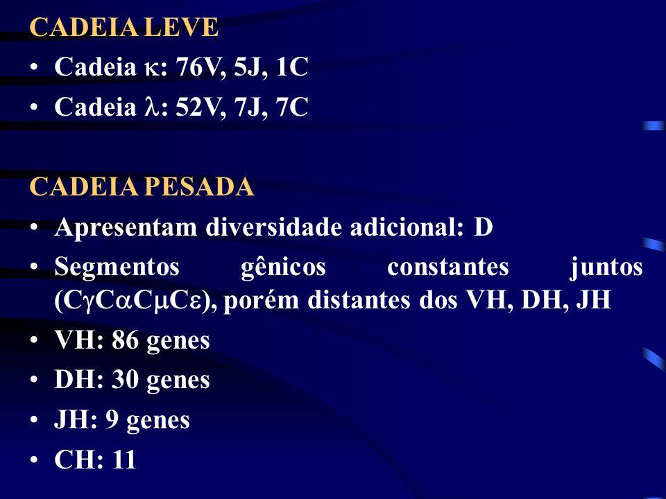 CADEIA LEVE Cadeia : 76V, 5J, 1C Cadeia : 52V, 7J, 7C CADEIA PESADA Apresentam diversidade adicional: D Segmentos gênicos constantes juntos (C C C C )