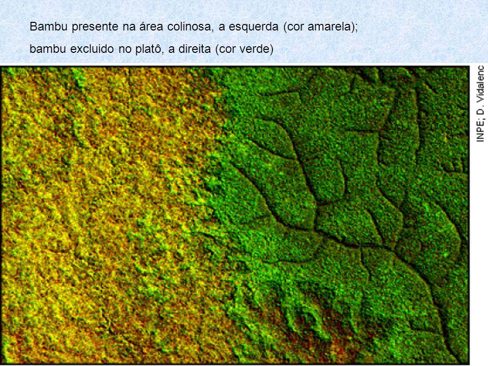 Bambu presente na área colinosa, a esquerda (cor amarela); bambu excluido no platô, a direita (cor verde)