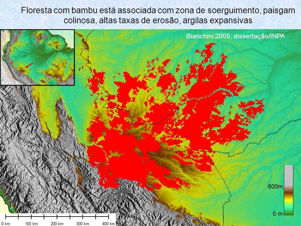 Floresta com bambu está associada com zona de soerguimento, paisgam colinosa, altas taxas de erosão, argilas expansivas Bianchini 2005; dissertação/INPA