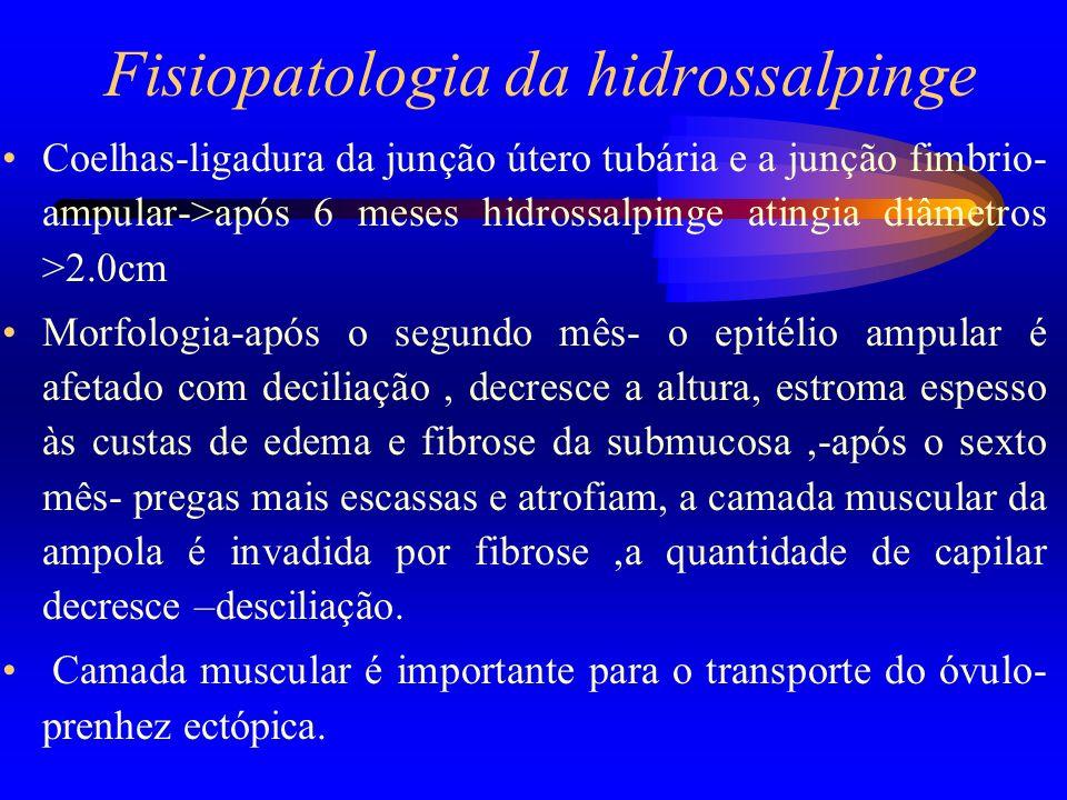 Fisiopatologia da hidrossalpinge Coelhas-ligadura da junção útero tubária e a junção fimbrio- ampular->após 6 meses hidrossalpinge atingia diâmetros >