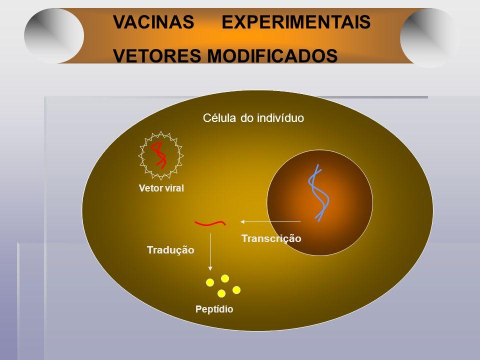 VACINAS EXPERIMENTAIS VETORES MODIFICADOS Transcrição Tradução Peptídio Vetor viral Célula do indivíduo