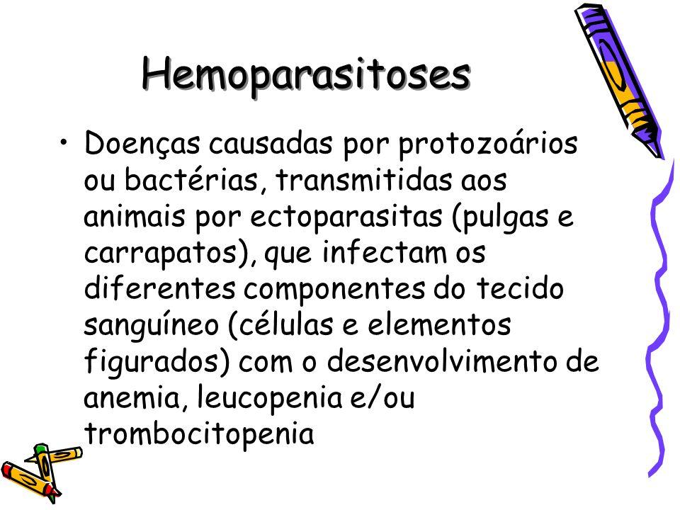 Hemoparasitoses Agentes mais comuns em nosso meio: Babesia canis Ehrlichia canis Mycoplasma haemofelis –São muito frequentes –Os sintomas clínicos são inespecíficos na maioria das vezes –Todos os animais são susceptíveis (uso de ectoparasiticidas??) –São graves e podem levar à morte se não tratadas
