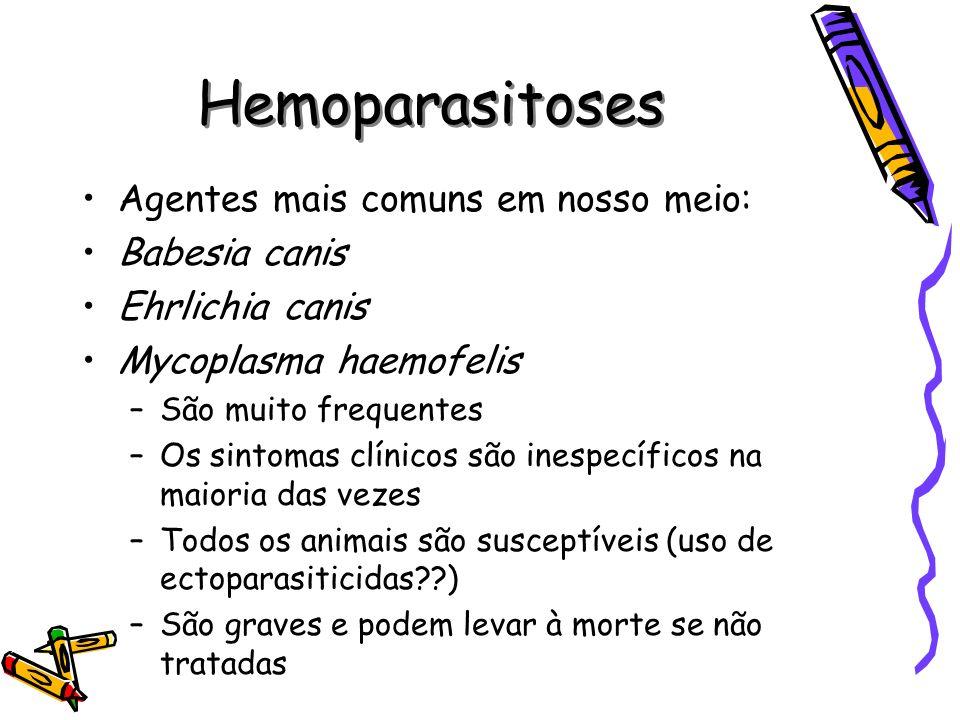 Hemoparasitoses Agentes mais comuns em nosso meio: Babesia canis Ehrlichia canis Mycoplasma haemofelis –São muito frequentes –Os sintomas clínicos são