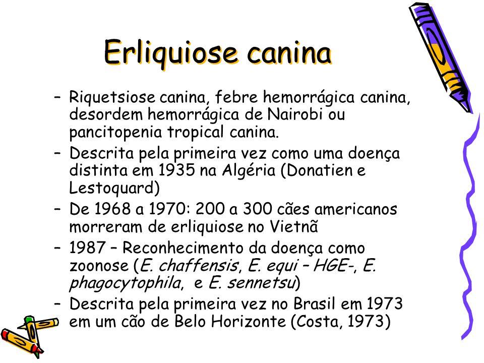 Erliquiose canina Diagnóstico –Detecção de mórulas no sangue periférico –Cultura –Anticorpo fluorescente direto - IFA –ELISA –PCR e nested PCR* *considerado mais sensível que o PCR simples (Aguirre et al., Annals of the New Yourk Academy Press, 2009).