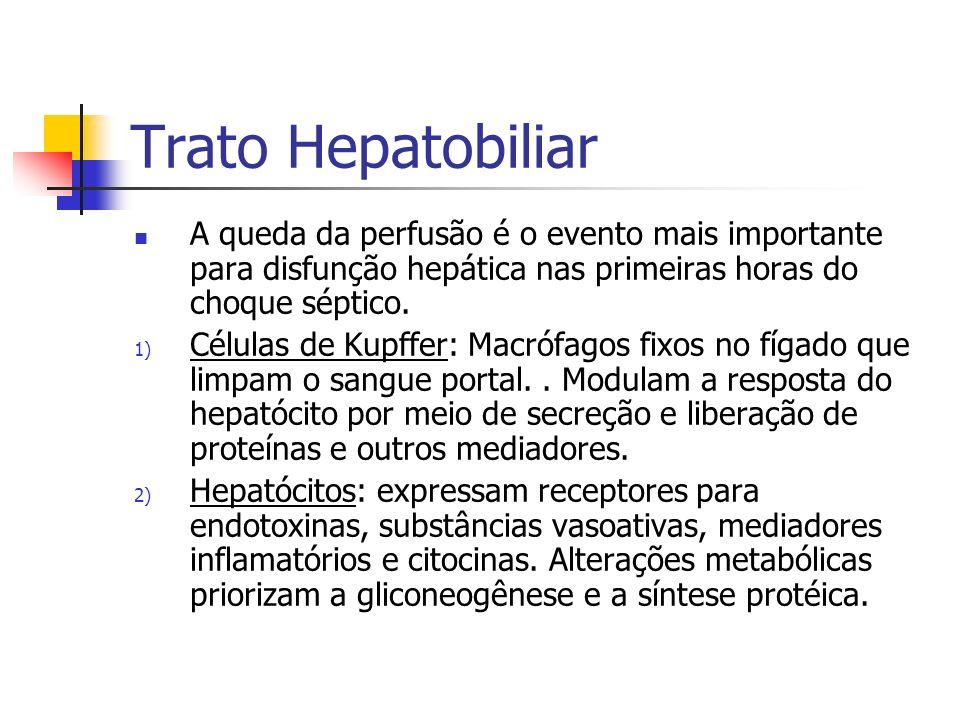 Trato Hepatobiliar A queda da perfusão é o evento mais importante para disfunção hepática nas primeiras horas do choque séptico. 1) Células de Kupffer