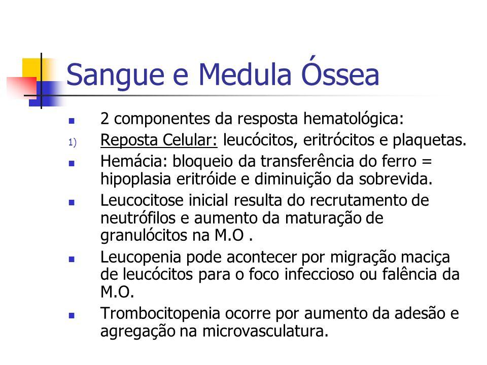 Sangue e Medula Óssea 2 componentes da resposta hematológica: 1) Reposta Celular: leucócitos, eritrócitos e plaquetas. Hemácia: bloqueio da transferên