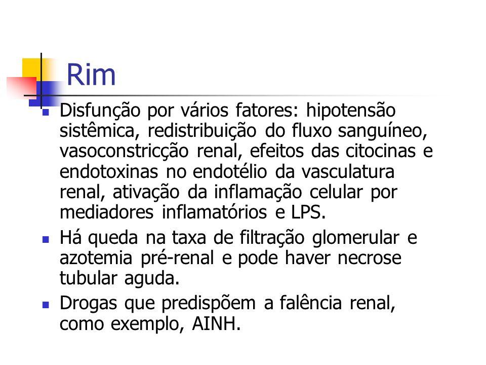 Rim Disfunção por vários fatores: hipotensão sistêmica, redistribuição do fluxo sanguíneo, vasoconstricção renal, efeitos das citocinas e endotoxinas