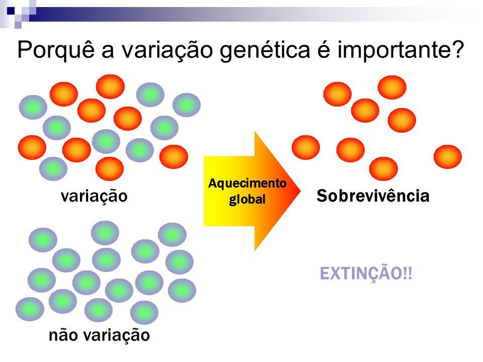 Porquê a variação genética é importante? variação não variação EXTINÇÃO!! Aquecimento global Sobrevivência