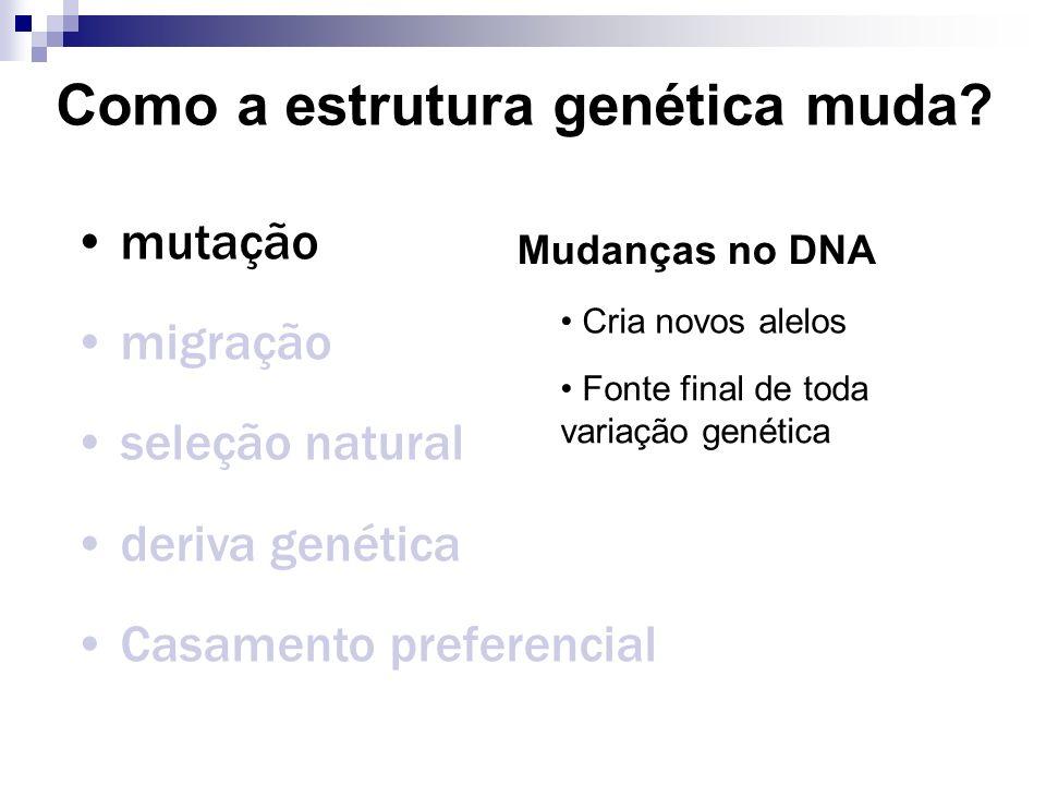 Como a estrutura genética muda? mutação migração seleção natural deriva genética Casamento preferencial Mudanças no DNA Cria novos alelos Fonte final