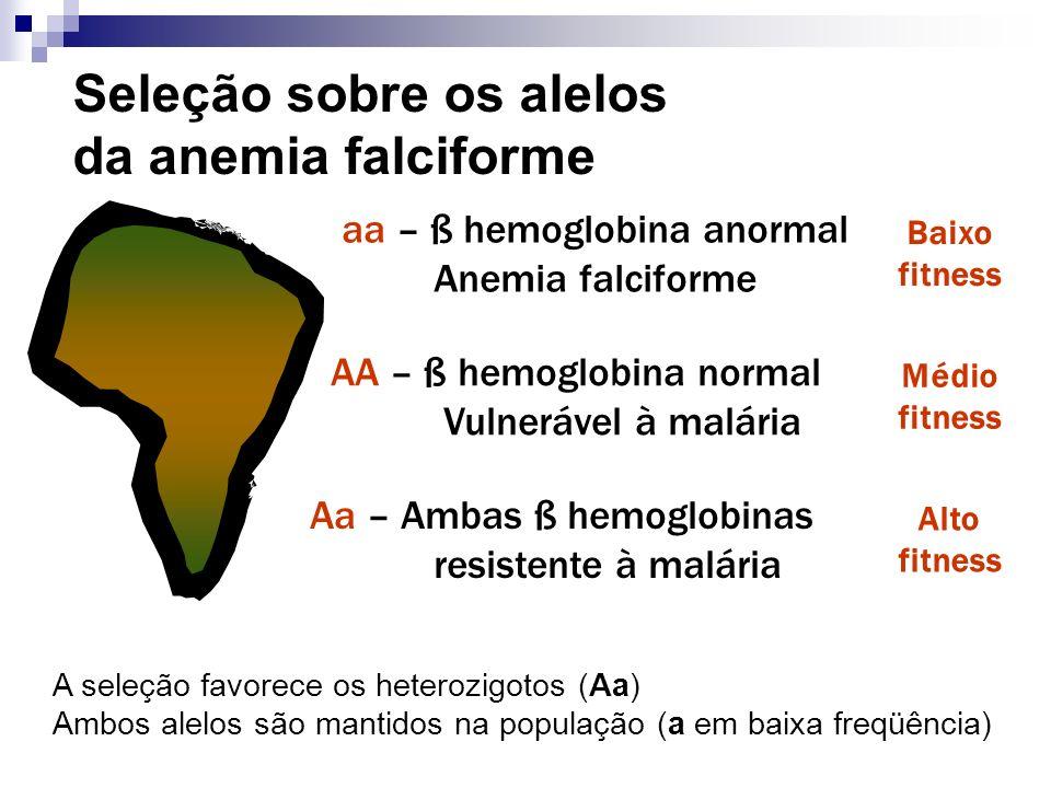 Seleção sobre os alelos da anemia falciforme aa – ß hemoglobina anormal Anemia falciforme Baixo fitness Médio fitness Alto fitness Aa – Ambas ß hemogl