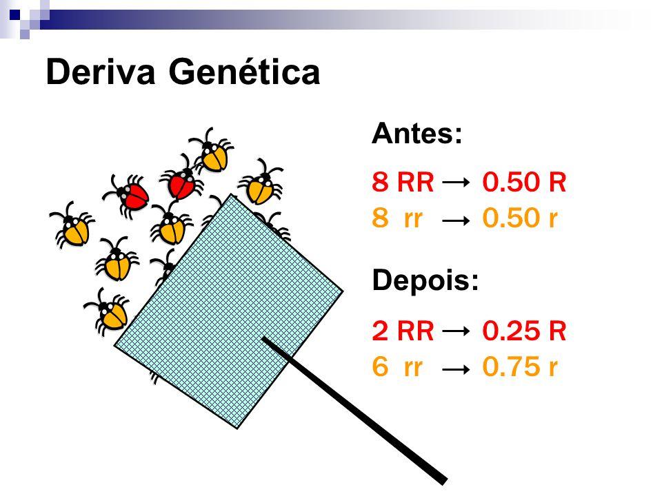 Deriva Genética 8 RR 8 rr 2 RR 6 rr 0.50 R 0.50 r 0.25 R 0.75 r Antes: Depois: