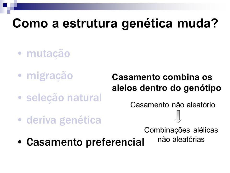 Como a estrutura genética muda? mutação migração seleção natural deriva genética Casamento preferencial Casamento combina os alelos dentro do genótipo