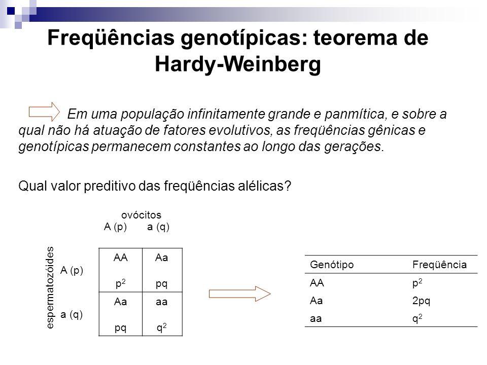 Freqüências genotípicas: teorema de Hardy-Weinberg Qual valor preditivo das freqüências alélicas? Em uma população infinitamente grande e panmítica, e