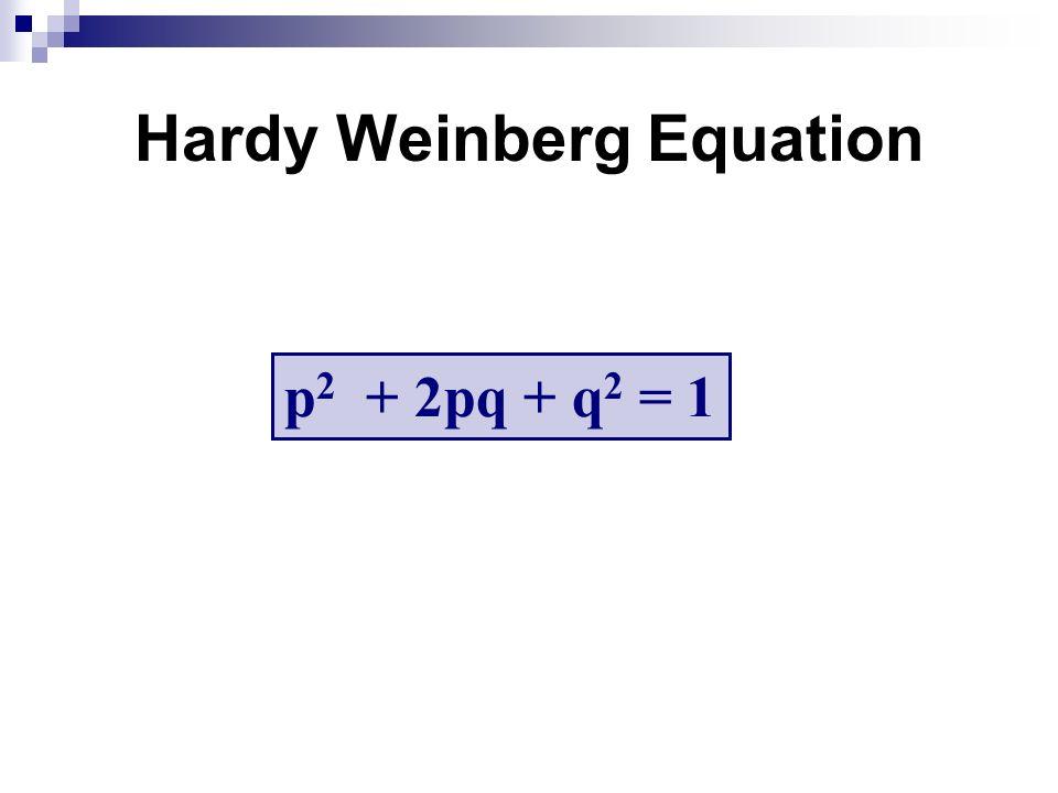 Hardy Weinberg Equation p 2 + 2pq + q 2 = 1