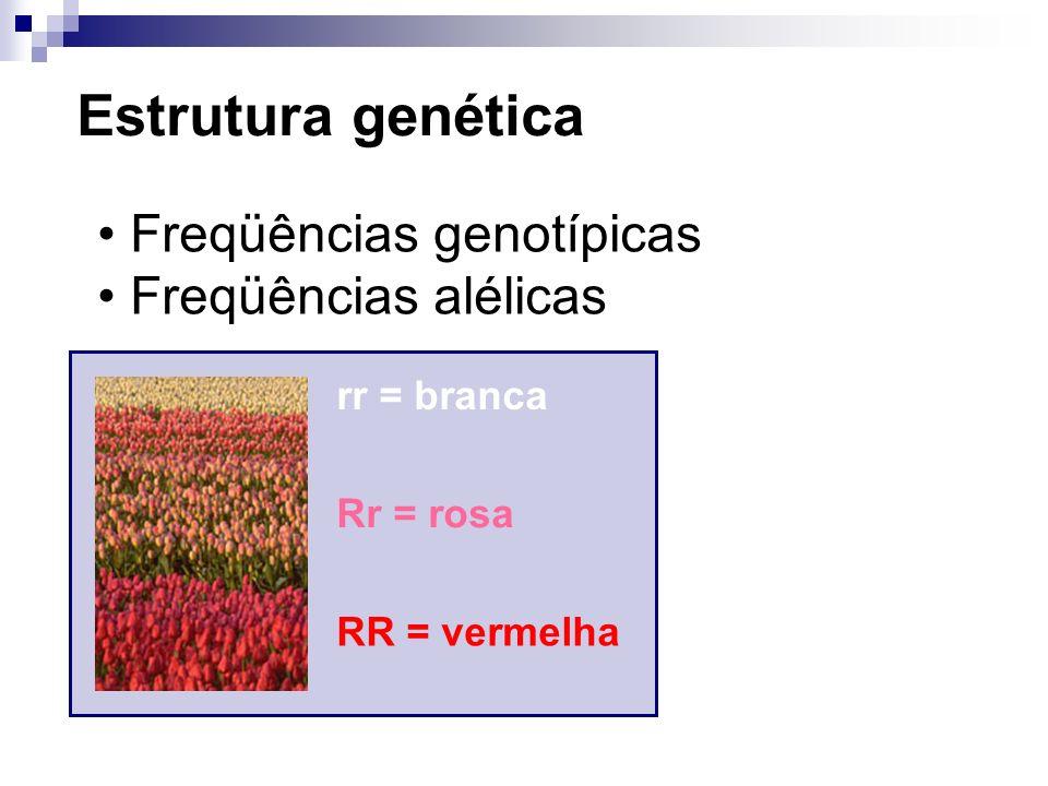 Estrutura genética Freqüências genotípicas Freqüências alélicas 200 = branca 500 = rosa 300 = vermelha Total = 1000 flores Freqüências genotípicas 200/1000 = 0.2 rr 500/1000 = 0.5 Rr 300/1000 = 0.3 RR