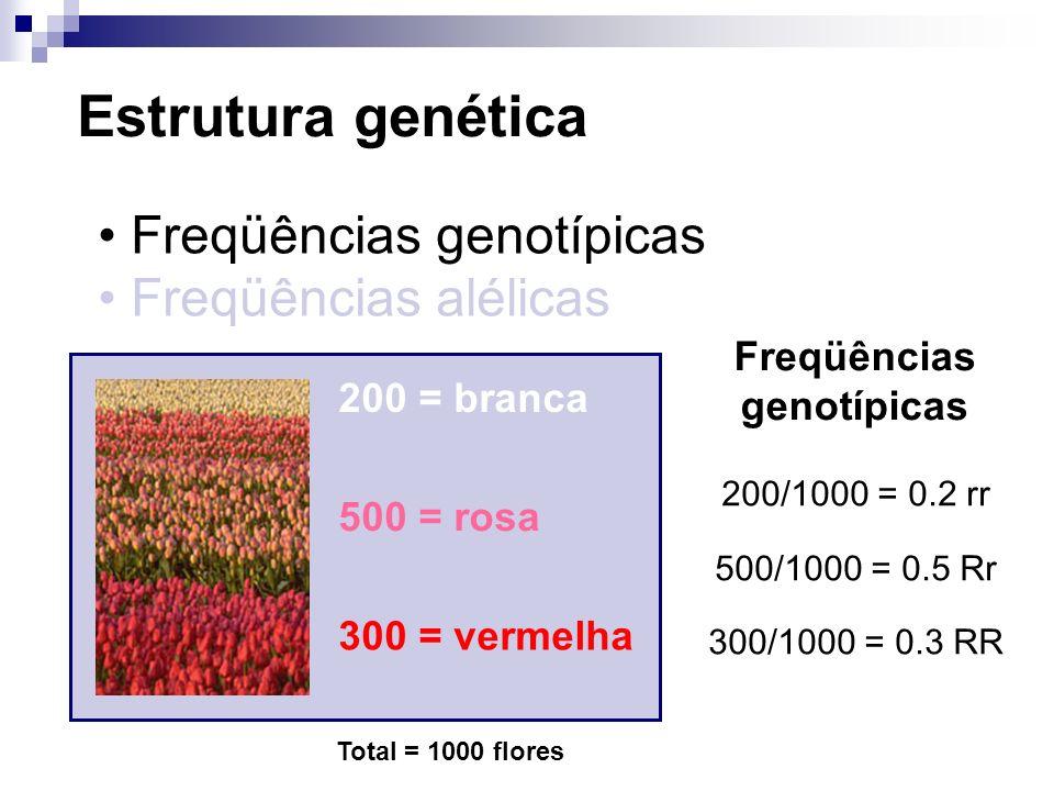 Estrutura genética Freqüências genotípicas Freqüências alélicas 200 = branca 500 = rosa 300 = vermelha Total = 1000 flores Freqüências genotípicas 200