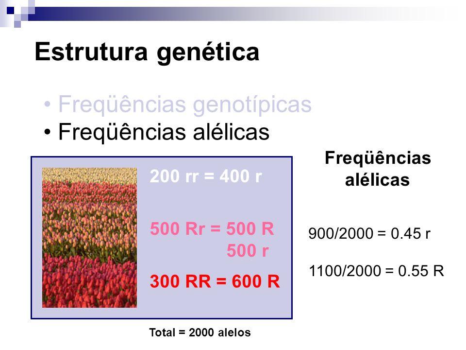 Estrutura genética Freqüências genotípicas Freqüências alélicas 200 rr = 400 r 500 Rr = 500 R 500 r 300 RR = 600 R Total = 2000 alelos Freqüências alé