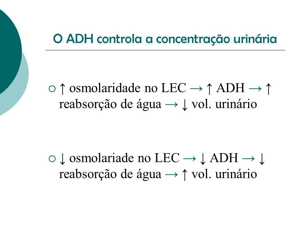 O ADH controla a concentração urinária osmolaridade no LEC ADH reabsorção de água vol. urinário osmolariade no LEC ADH reabsorção de água vol. urinári
