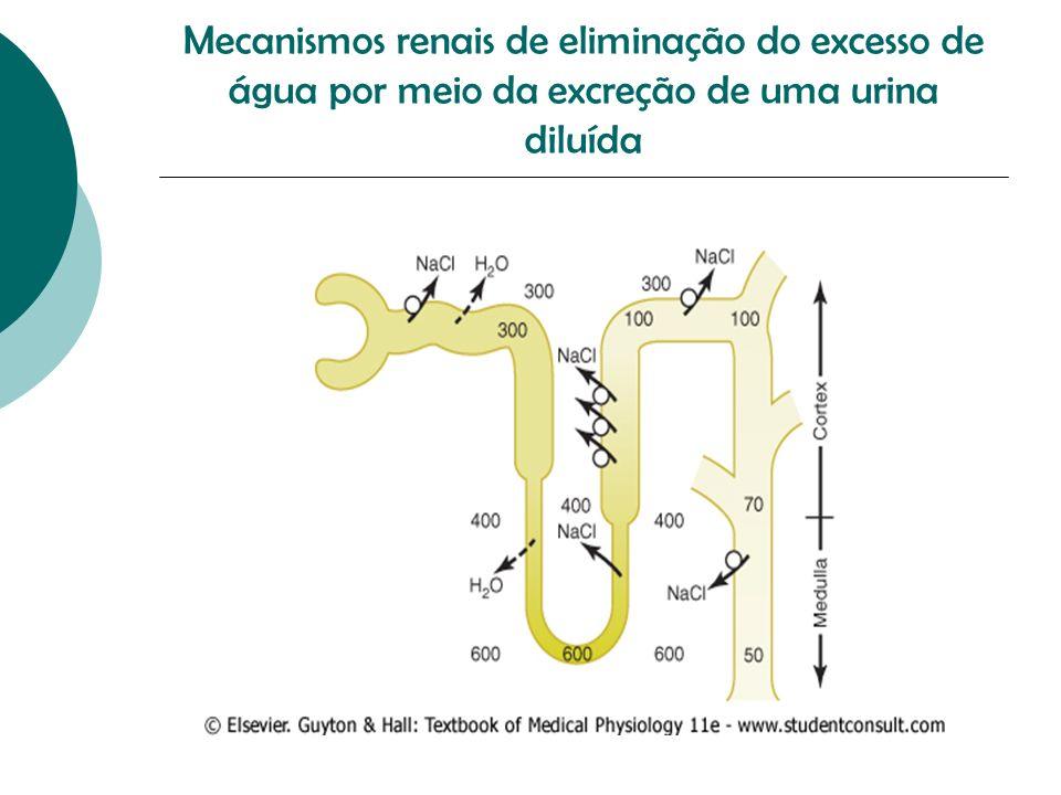 Diabetes Insípido Central Produção insuficiente de ADH Os segmentos tubulares distais não reabsorvem água na ausência de ADH Conseqüência: Urina diluída, com volumes urinários de 15L/dia TTO: desmopressina