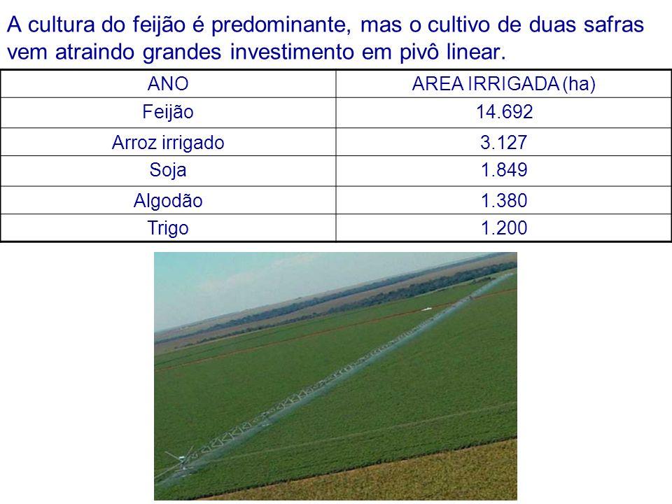 A cultura do feijão é predominante, mas o cultivo de duas safras vem atraindo grandes investimento em pivô linear. ANOAREA IRRIGADA (ha) Feijão14.692