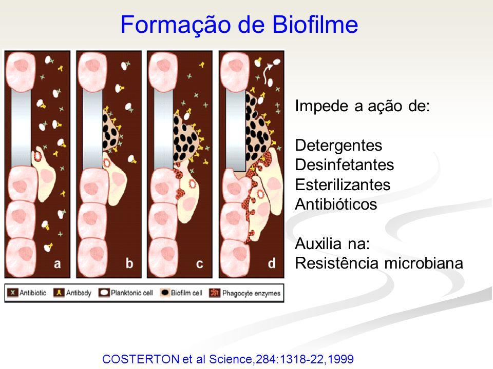 COSTERTON et al Science,284:1318-22,1999 Formação de Biofilme Impede a ação de: Detergentes Desinfetantes Esterilizantes Antibióticos Auxilia na: Resi