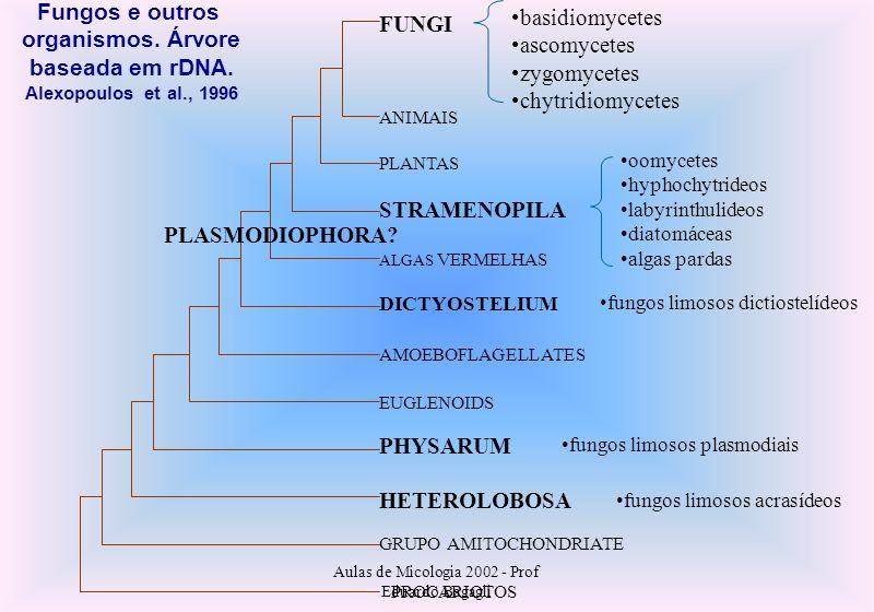 Aulas de Micologia 2002 - Prof Eduardo Bagagli basidiomycetes ascomycetes zygomycetes chytridiomycetes oomycetes hyphochytrideos labyrinthulideos diat