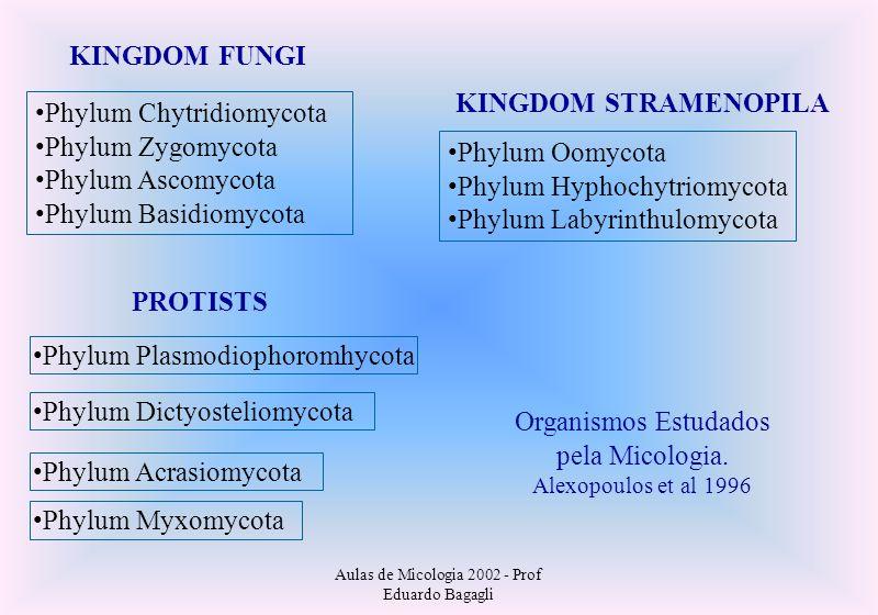Aulas de Micologia 2002 - Prof Eduardo Bagagli KINGDOM FUNGI Phylum Chytridiomycota Phylum Zygomycota Phylum Ascomycota Phylum Basidiomycota KINGDOM S